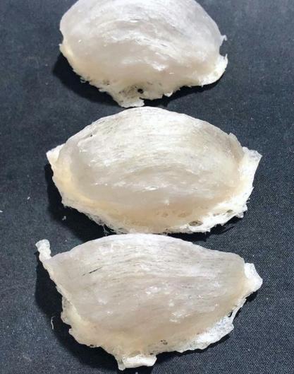 Grade mangkuk super sarang walet bersih
