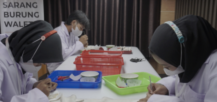 Peluang usaha cuci sarang burung walet modeal kecil